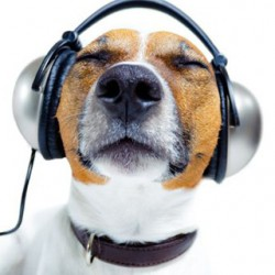 Music Podcasts